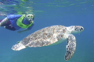 Sea Base USVI Snorkeling WZ